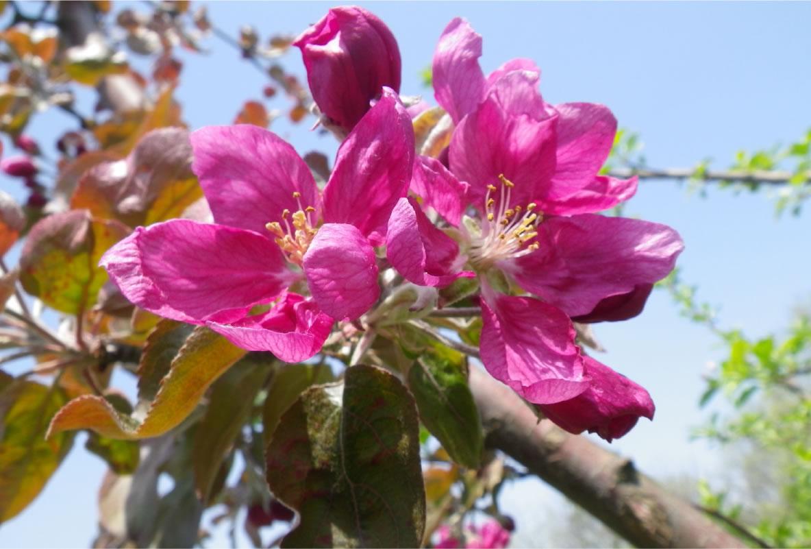ジェネバの花
